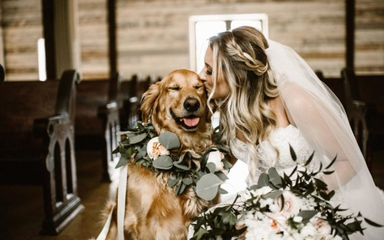 Tips for Including Animals in Your Wedding https://www.weddingery.com